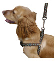 Dog Collars, Leads, harnesses & Tethering